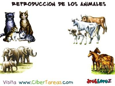 Reproduccion de los Animales