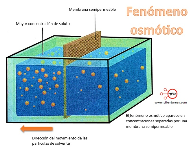 fenomeno osmotico quimica