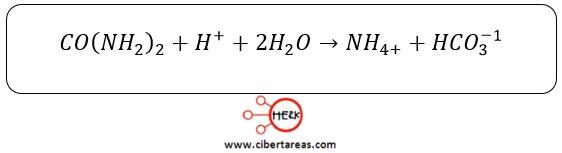 proceso hidrolisis urea quimica