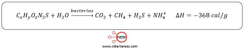 putrefaccion de proteinas ecuacion quimica