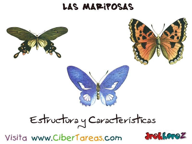 Estructura y Características – Las Mariposas | CiberTareas