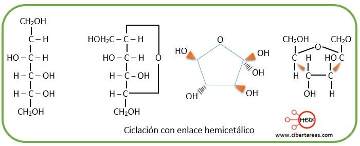 ciclacion con enlace hemicetalico