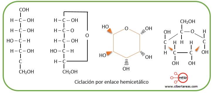ciclacion por enlace hemicetalico