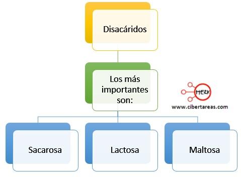 clasificacion de los disacaridos