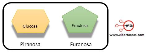 piranosa furanosa estructura