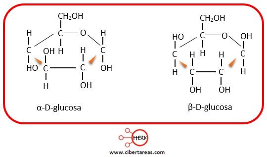 proyecciones haworth glucosa