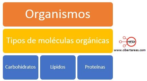 tipos de moleculas organicas mapa conceptual