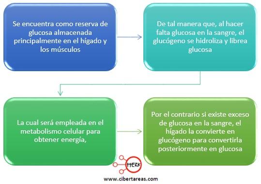 caracteristicas del glucogeno polisacaridos quimica