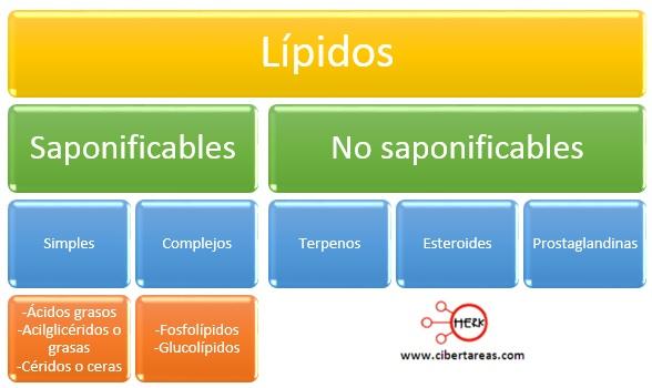 clasificacion de los lipidos mapa conceptual