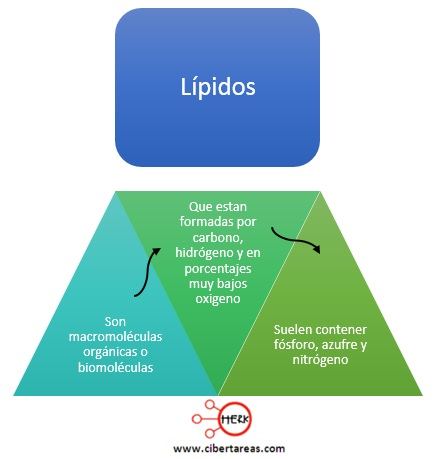concepto de lipidos mapa conceptual lipidos