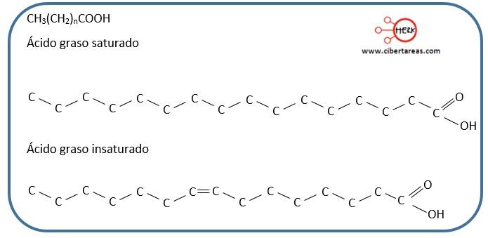 estructura acido graso saturado estructura acido graso insaturado