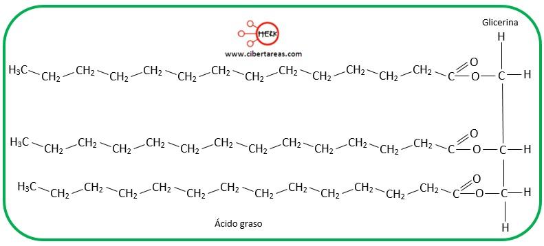 estructura de la molecula de triglicerido triacilglicerido
