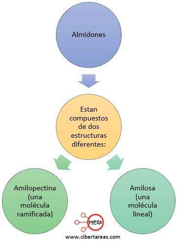 estructura de los almidones mapa conceptual