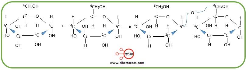 estructura enlace glucosidico entre glucosa 1, 6