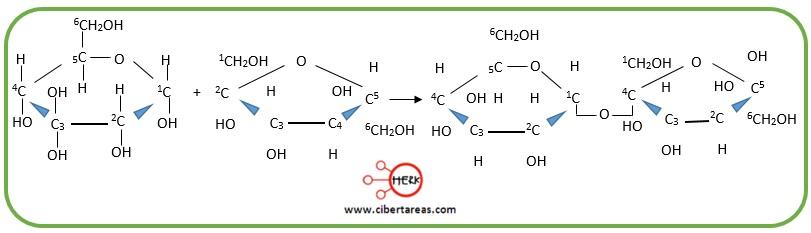 estructura enlace glucosidico entre glucosa y fructosa