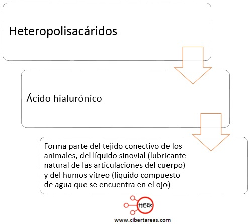 heteropolisacaridos quimica mapa conceptual acido hialuronico