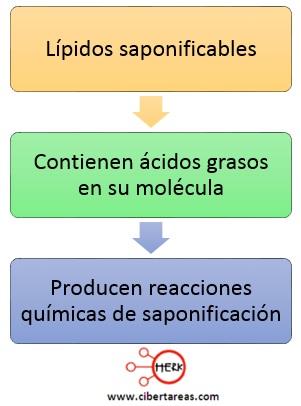 lipidos saponificables mapa conceptual