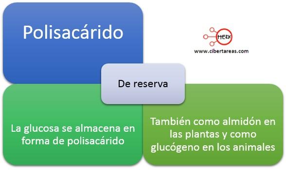 polisacarido de reserva mapa conceptual