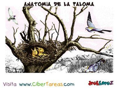 Ciclo Anatomia de la Paloma