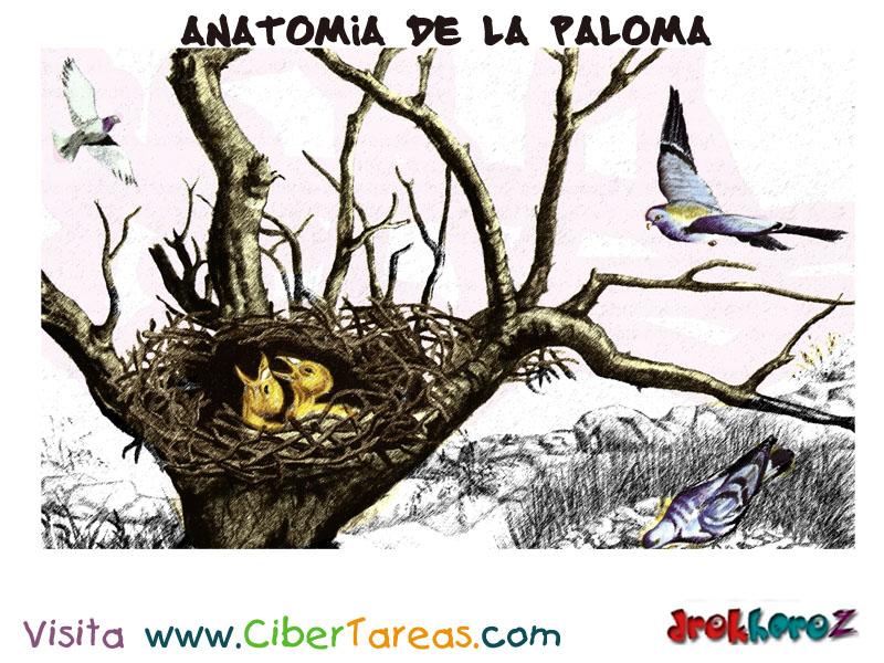 Las Diferentes Especies – Anatomía de la Paloma | CiberTareas