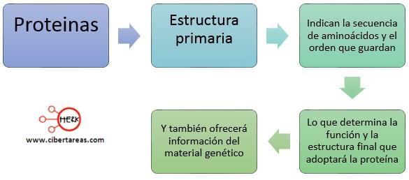 Estrucutra primaria de las proteinas quimica 2
