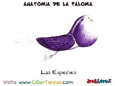 Las Especies - Anatomia de la Paloma