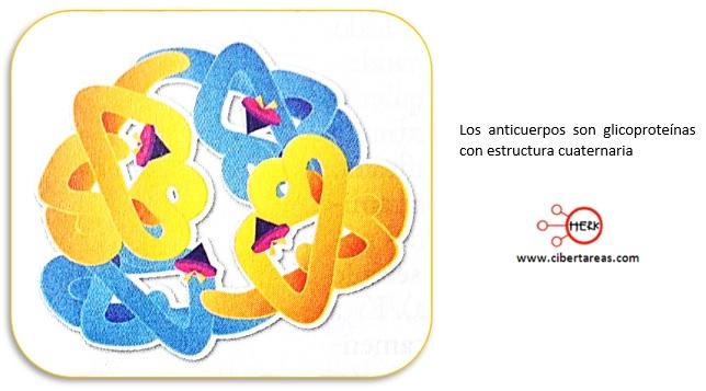 estructura cuaternaria de las proteinas