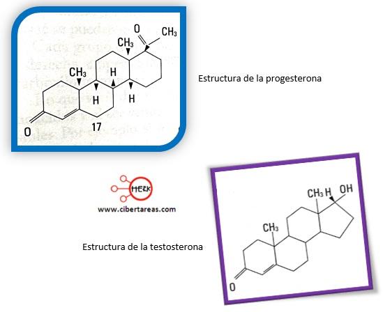 estructura de la progesterona estructura de la testosterona