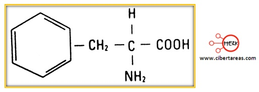 estructura molecular de la fenilalanina