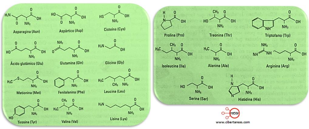 estructura molecular de las proteinas naturales y esenciales