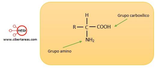 estructura molecular de los aminoacidos