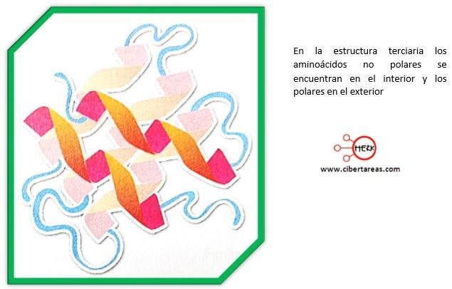 estructura terciaria de las proteinas quimica