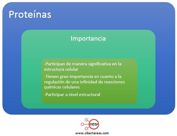 importancia de las proteinas mapa conceptual
