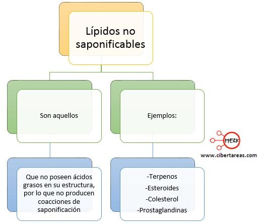 lipidos no saponificables mapa conceptual