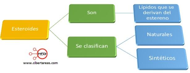 mapa conceptual esteroides concepto clasificacion