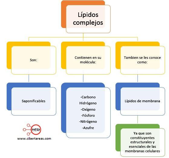 mapa conceptual lipidos complejos