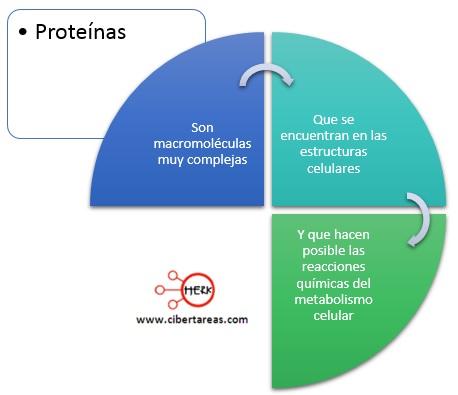 proteinas mapa conceptual concepto proteina