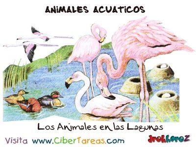 Los Animales de las Lagunas – Animales Acuáticos 0