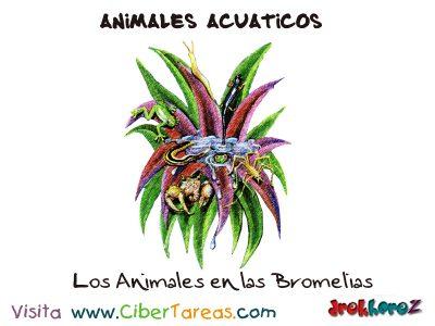 Los Animales de las Bromelias – Animales Acuáticos 0