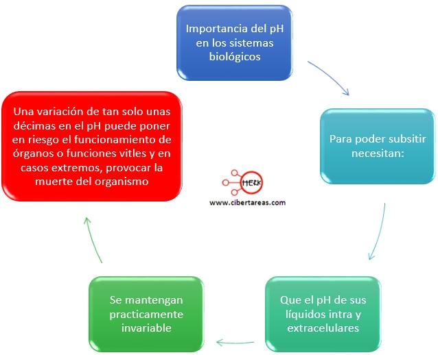 importancia-del-ph-en-los-sistemas-biologicos.jpg