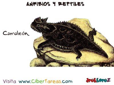El Camaleón –  Anfibios y Reptiles 0