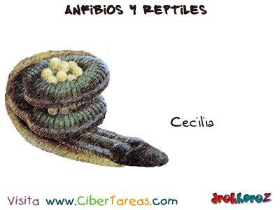 Cecilia – Anfibios y Reptiles 0