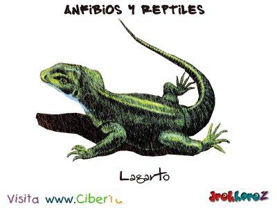 Los Lagartos – Anfibios y Reptiles 0