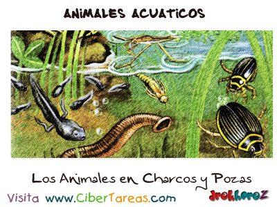 Los Animales de Charcos y Pozas – Animales Acuáticos 0