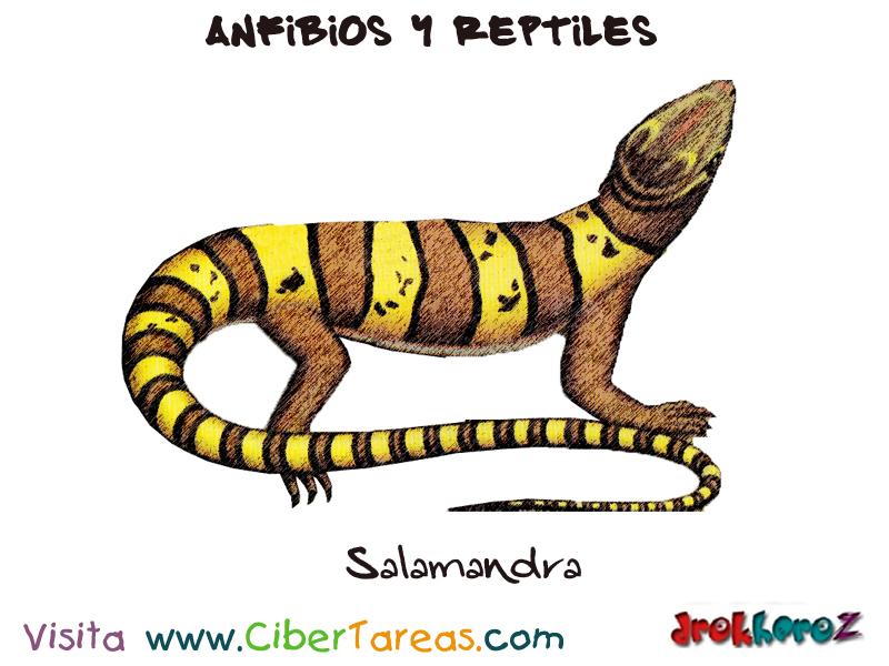 Contemporáneo Salamandra Anatomía Interna Galería - Anatomía de Las ...