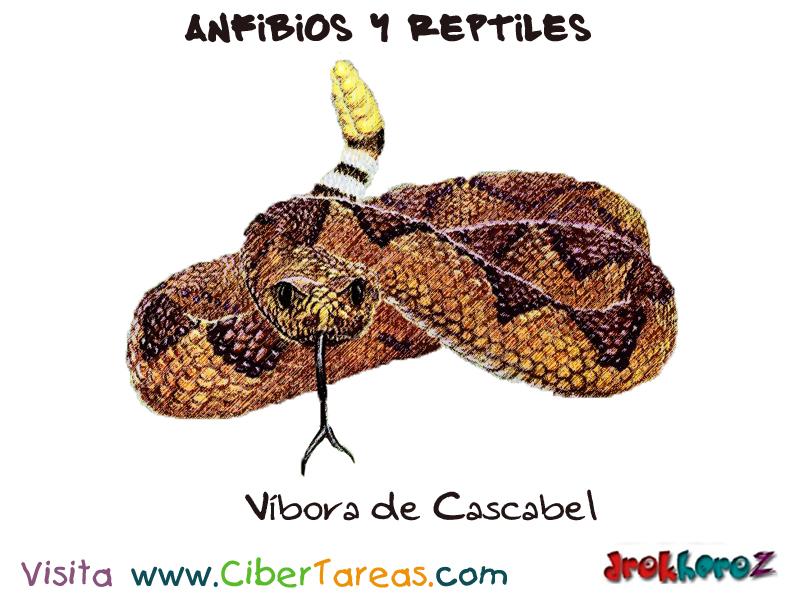Vistoso Serpiente De Liga Anatomía Ilustración - Anatomía de Las ...