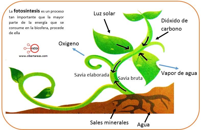 reacciones de oxido-reduccion fotosintesis ejemplo