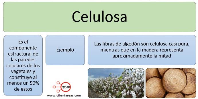 Celulosa – Temas Selectos de Química 2 0
