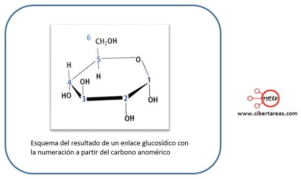 Enlace glucosídico – Temas Selectos de Química 2 0