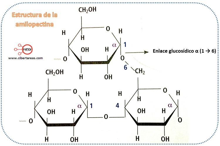Almidón – Temas Selectos de Química 2 1